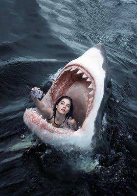 tubarão fotografia