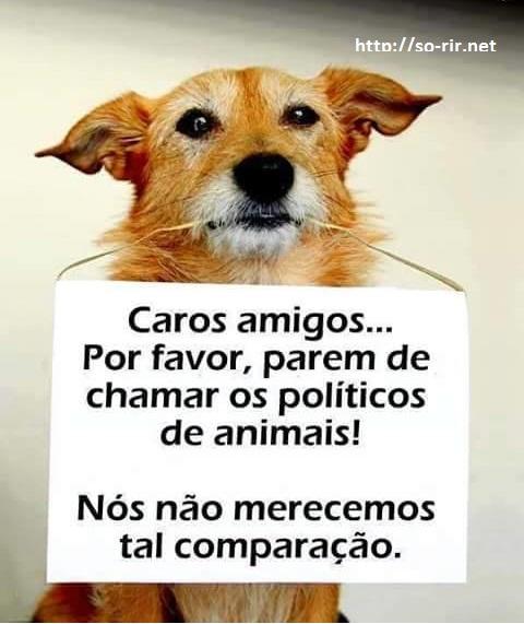 animais politicos