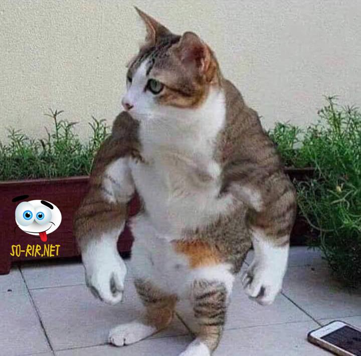 anedotas de gatos, anedotas de ginásio,  piadas de gatos, piadas de ginásio, animais, proteína, whey